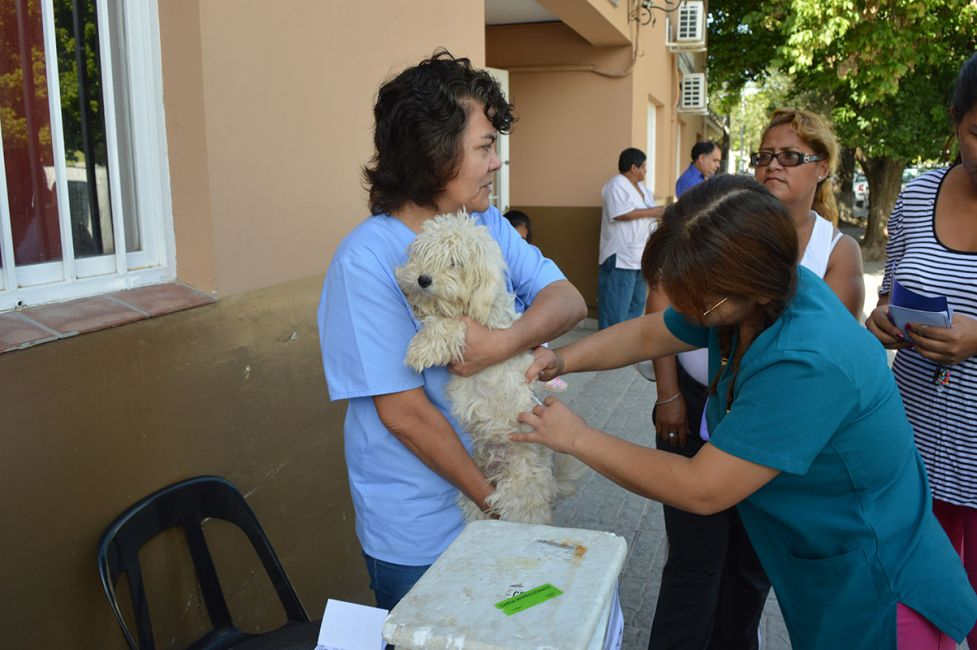 Bienestar Animal recordó cuándo y dónde castrar y vacunar a las mascotas