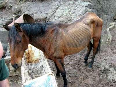 San Luis: Imputan a un hombre por crueldad animal