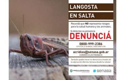Argentina, Paraguay y Bolivia se unen para combatir a la langosta