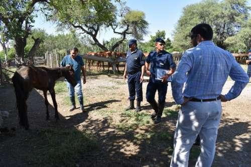 Detalles de los cuidados sanitarios que reciben los caballos judicializados