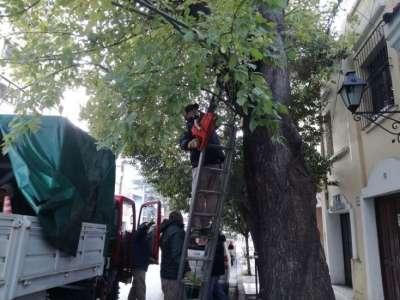 Se realizaron tareas de poda de despeje y levante en la ciudad